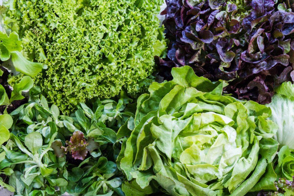 Österreichs Gärtner und Bauern erzeugen viele verschiedene Salatarten für jede Jahreszeit. / © Land schafft Leben, 2017