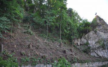 Als Vorbereitung für die Montage eines Steinschlagnetzes wurden Baumschlägerungen durchgeführt.
